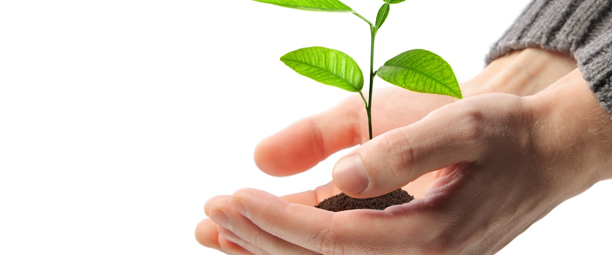 Hands_Small_Plant