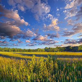 The World Is Quiet Here by Phil Koch - Landscapes Prairies, Meadows & Fields ( vertical, arts, fine art, travel, yellow, love, sky, nature, weather, flowers, light, orange, trending, colors, twilight, art, mood, journey, horizon, rural, portrait, country, dawn, environment, season, serene, popular, outdoors, lines, natural, hope, inspirational, canon, wisconsin, ray, joy, landscape, spring, sun, photography, life, emotions, dramatic, horizons, inspired, clouds, office, hdr, purple, park, heaven, camera, beautiful, scenic, living, morning, lilacs, field, unity, blue, sunset, amber, peace, meadow, beam, sunrise, earth )