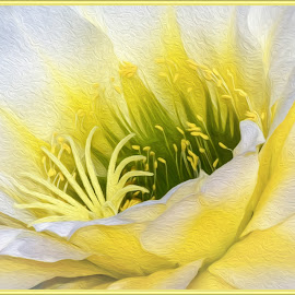 June Noon by Dawn Hoehn Hagler - Digital Art Things ( tucson, june noon, arizona, yellow, yellow flower, photoshop, oil paint, flower, tohono chul park, digital art, cactus flower, cactus, garden )