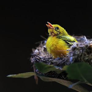 a burung 001.jpg