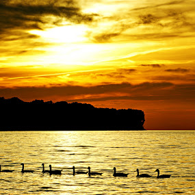 The Golden Hour  by Terri Mills - Landscapes Sunsets & Sunrises ( orange, sky, nature, sunset, lake, beach, sun, golden,  )
