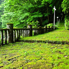 mossy walkway by Leimaile Guerrero - City,  Street & Park  Street Scenes ( japan, street, moss, mossy, walkway )