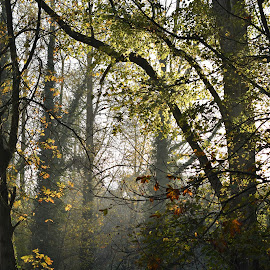 by Eloise Rawling - Nature Up Close Trees & Bushes ( autumn, trees, misty )