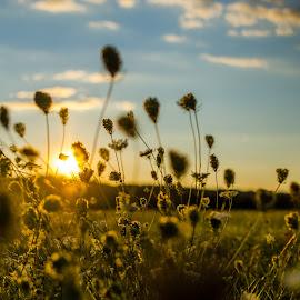 by Siniša Biljan - Landscapes Sunsets & Sunrises