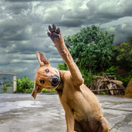 high five or four... by John Dé Nielsen - Animals - Dogs Portraits ( wave, funny, vietnam, pooch, viral )