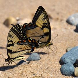 by Trisha Hochreiter - Animals Insects & Spiders