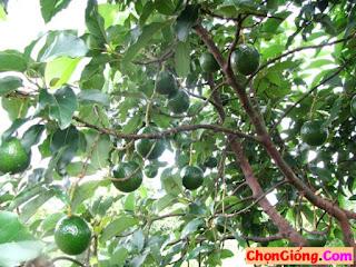 Cach-chon-bo-booth-7-ngon-va-chat-luong