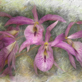 Orchids by Al Duke - Digital Art Abstract ( orchids )