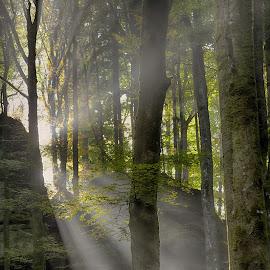 Magic Sunrays by Marco Bertamé - Nature Up Close Trees & Bushes