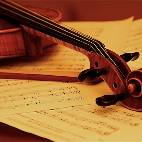 Violin S7.jpg