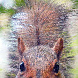 Watching you by Neil Wilson - Animals Other Mammals