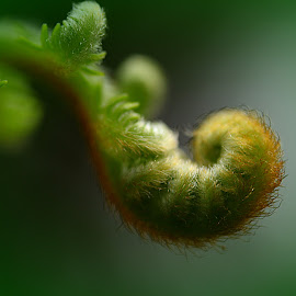 Fern Frond by Carmina Quesada - Nature Up Close Other plants ( green, nature up close, frond, leaf, natural,  )