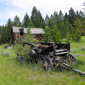 Horse Drawn Wagon by James Oviatt - Transportation Other
