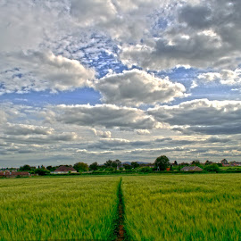 by Kevin Morris - Landscapes Prairies, Meadows & Fields