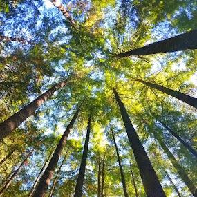 Up by Jordan Wangsgard - Nature Up Close Trees & Bushes ( center, sky, nature, wood, blue, green, trees, leaf, circle, leaves )