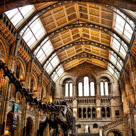 Natural History Museum LONDON by Gianluca Presto - Buildings & Architecture Public & Historical ( building, architechture, british, cultural, museum, skeleton, architecture, historic, science, london, dinosaur, bones, architectural, historical, culture )