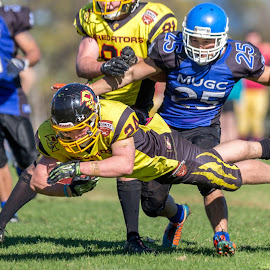 Gridiron Victoria  by John Torcasio - Sports & Fitness American and Canadian football ( outdoor, team sport, uni royals, sport, gridiron victoria, photo, predators )
