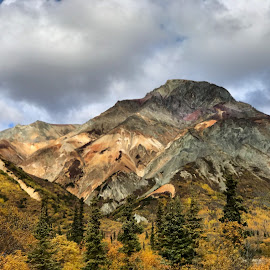 Fall Sheep mountain  by Sabra Neyman - Landscapes Mountains & Hills ( clouds, alaskan photographer, mountain, fall colors, alaska photography, fall, alaska, trees, leaves, sheep mountain )