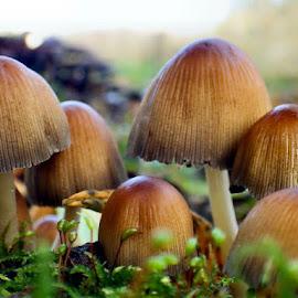 Fun-guys :)  by Angela Neild - Nature Up Close Mushrooms & Fungi