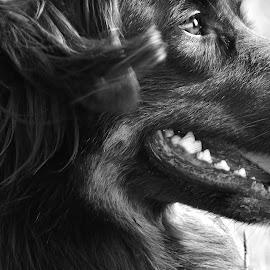 Balou by Daggi Meyer - Animals - Dogs Portraits