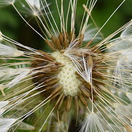 macro by Zhenya Philip - Nature Up Close Other plants ( macro, photography, flower )