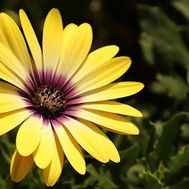 Yellow Flower by Lawrnel Harrison - Flowers Flowers in the Wild