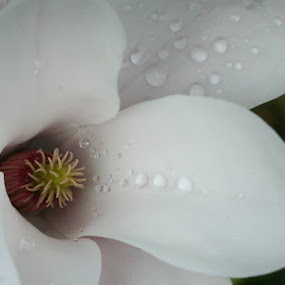 by Ray Whyte - Nature Up Close Flowers - 2011-2013