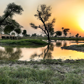 Y8 by Abdul Rehman - Landscapes Sunsets & Sunrises ( tree, grass, sunset, bridge, natural, sun )