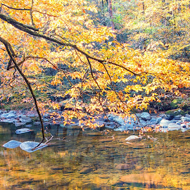 Autumn by Carol Ward - Landscapes Waterscapes ( tn, autumn leaves, great smoky mountains national park, reflections, trees, leaves, rocks, smoky mountains )