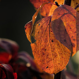 by Ivanka Ruter - Nature Up Close Leaves & Grasses