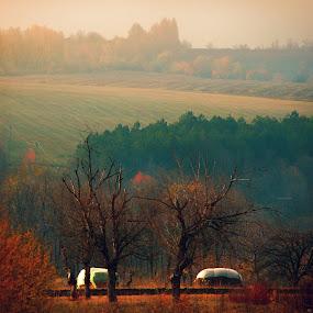 Quiet by Lilian Iatco - Landscapes Forests ( calm, car', colors, ok, travel,  )