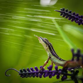 slurpie.... by Henry Pribadi - Animals Reptiles ( shikeigoh, 2013, elala, mwp, petphotography )
