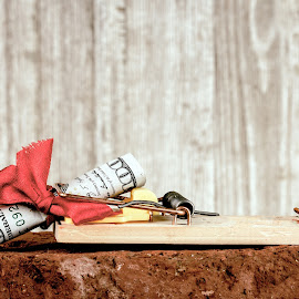 You Never Know What You'll Catch by Rob Heber - Artistic Objects Other Objects ( greed, spring loaded, gift, detail, gamble, wood, mouse trap, bill, still life, brick, expensive, indoors, wood grain background, spring, red brick, rolled bill, currency, risk, strange, danger, pest control, metal, ribbon, money, wood grain, closeup, triggered, ideas, studio shot, red bow, money in a moust trap, rolled, texture, gift wrapped, rodent trap, close up, trap, bait, rough texture, paper money, cash, bow, odd, conceptual, hundred dollar bill )