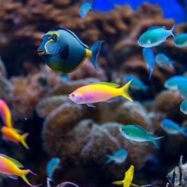 Toledo Zoo Aquarium  by Denny Betts - Animals Fish ( coral, zoo, colorful, fish, aquarium )