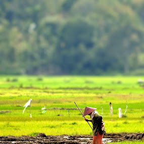 A Farmer in The Fields by Rony Nofrianto - People Street & Candids ( farmer, candids, farmer and fields, rice fields, fields )