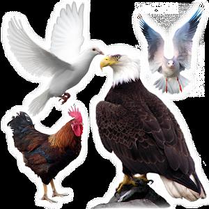 تعليم أسماء الطيور For PC (Windows & MAC)