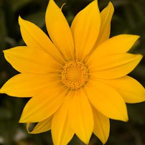Shine. by Ken Quiñones Street - Digital Art Things ( yellow, flower )