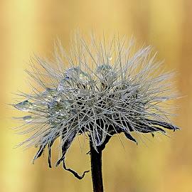 podzimní kapky rosy by Vláďa Lipina - Nature Up Close Natural Waterdrops