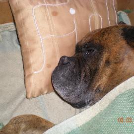 My best friend by Maria Almeida - Animals - Dogs Portraits