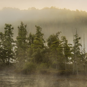 Misty Morning Island by William Ducklow - Landscapes Waterscapes