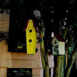 Birdhouses by Mark Zukaitis - City,  Street & Park  Neighborhoods