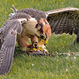 by Jason Baker - Animals Birds