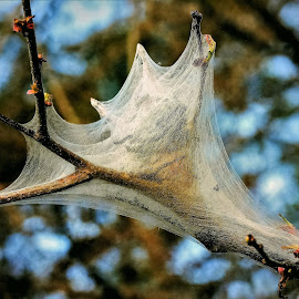 Natures web by Sue Delia - Nature Up Close Webs ( nature, worms, web,  )