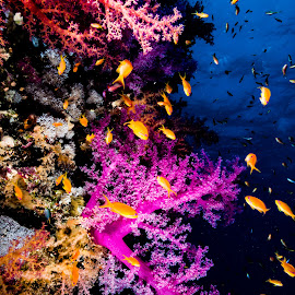 sharm_uw1 by Emanuele Pola - Animals Sea Creatures ( nauticam, underwater, sharm el sheikh, diving, olympus )