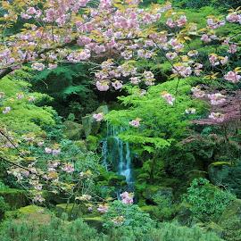 by Beth Lauss - City,  Street & Park  City Parks ( japanese garden, portland, waterfall )