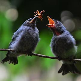 by Ajar Setiadi - Animals Birds (  )