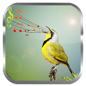 App Birds Sounds Ringtones APK for Windows Phone
