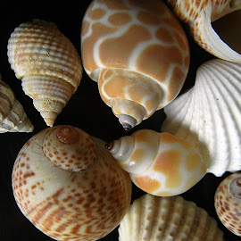 Seashells huddle by Pradeep Kumar - Artistic Objects Still Life