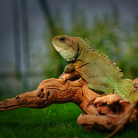 Game of Thrones by Phil Robson - Animals Reptiles ( lizard, scaley, scales, jungle, green reptile )