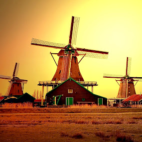 'The Windmills' by Ibrahim Samsudin - Landscapes Prairies, Meadows & Fields ( wheats, amsterdam, windmills, peacefully, daylight )